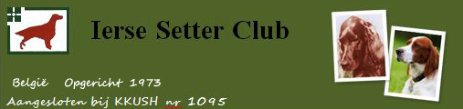 Irish setter club