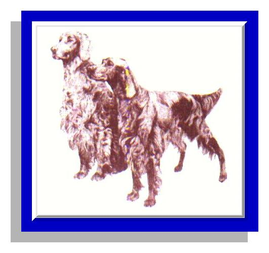 Irish Setter Breeders Club